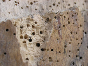 wood-attacked-by-insects2